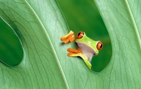 frog, leaf, animals