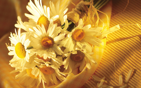 background, macro, petals, chamomile, bouquet