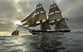 nature, sailfish, sea