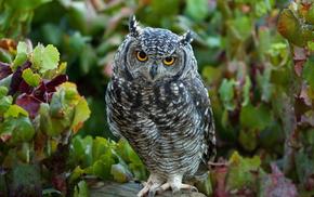 animals, bird, leaves, forest, owl