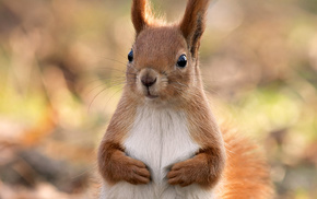 beautiful, animal, squirrel, animals, forest