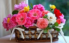 flowers, roses, petals