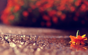 flower, bokeh, road, highlights, macro