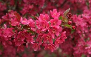tree, bloom, flowers