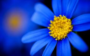 macro, flower, petals, flowers
