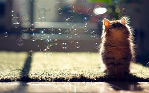 животные, Y ben torode, кошка, daisy, пузыри, мыльные
