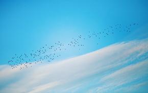 sky, birds, minimalism, nature