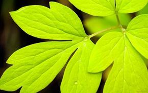 nature, macro, leaves