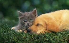 kitten, dog, animals