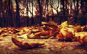 leaves, autumn, macro