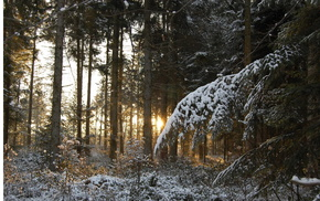 snow, winter, trees, twigs, forest