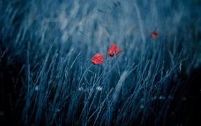 field, nature, bokeh, flowers, wind