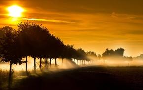 деревья, солнечный свет, природа, солнечные лучи