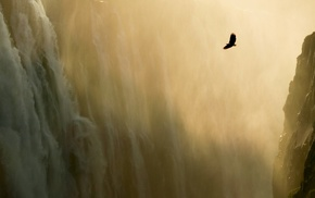 water, animals, nature, eagle, mist, waterfall