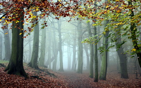 nature, forest, autumn, trees, mist