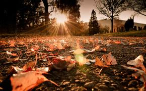 rays, light, autumn, foliage, road
