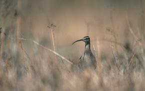 bird, grass, animals