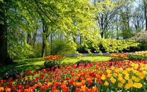 tulips, nature, park, spring, beautiful