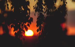 nature, Sun, twigs, foliage, sunset