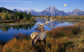 animals, horns, nature, landscape, moon