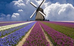 field, clouds, tulips, flowers