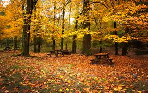foliage, forest, trees, autumn
