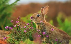 grass, flowers, animals
