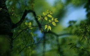 macro, twigs, bokeh