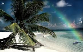rainbow, island, nature, beach, palm trees