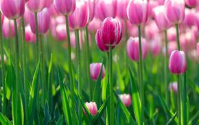 flowers, flower, greenery