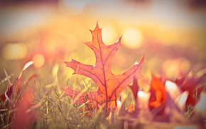 greenery, grass, autumn, leaves, macro