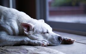 dog, animals, rest