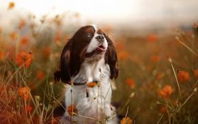 animals, mood, nature, dog