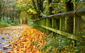 autumn, leaves, fence, road