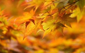 macro, leaves, autumn