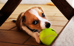 animals, puppy, dog
