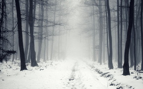 forest, mist, road, snow, winter