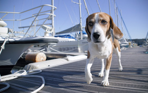 dog, boat, berth, yacht, animals