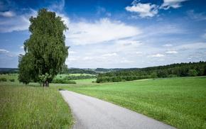 sky, tree, grass, road, nature