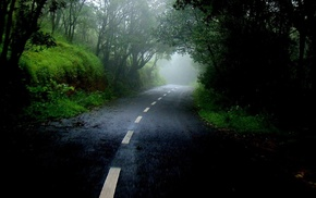 mist, forest, nature, cloudy, road