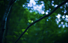 foliage, macro, leaves, tree, branch