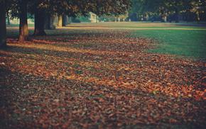 foliage, trees, autumn, nature