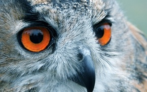 bird, owl, eyes, reflection, animals