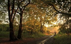 fence, forest, landscape, autumn, road