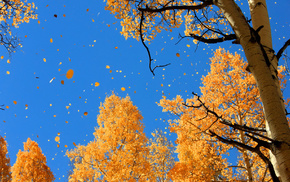 autumn, nature, sky, foliage