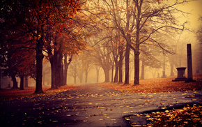 autumn, leaves, cities, trees, park