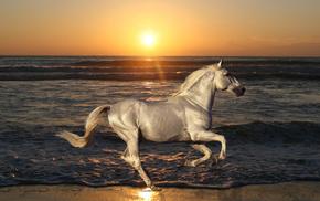 animals, nature, horse