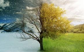 winter, nature, autumn