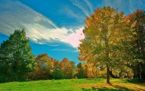 пейзаж, Природа, осень, поляна, деревья, солнечные лучи
