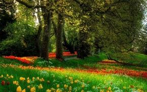 парк, природа., природа, цветы, трава, деревья